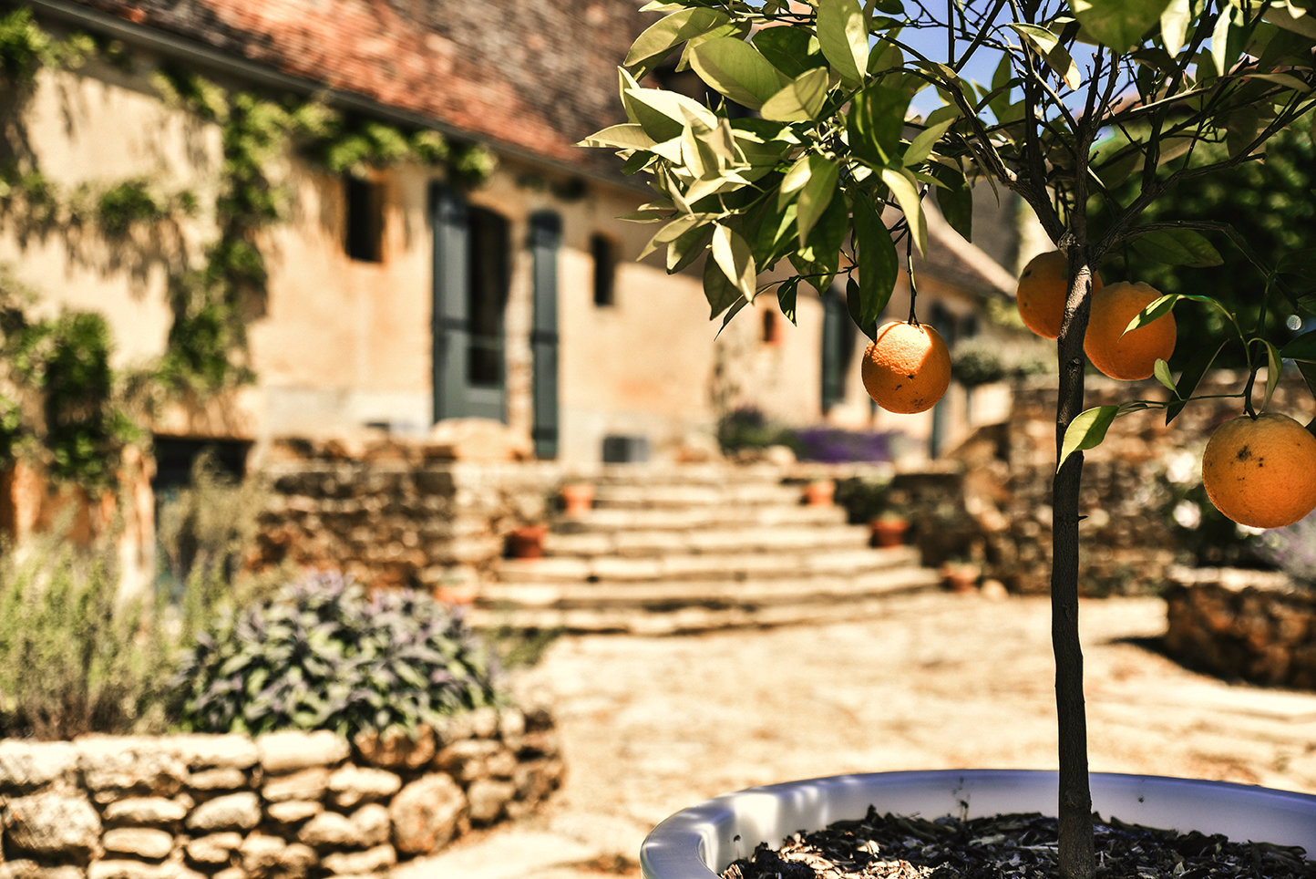 Looking past an orange tree in a white pot to the well-worn steps leading up to Le Mas, a characterful holiday home in the Dordogne, France